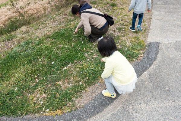 子供達はタンポポ摘みに必死
