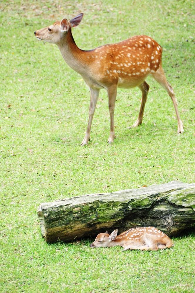 吉野なこ 動物の写真