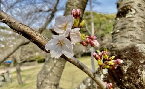 例年なら花見で盛り上がる時期